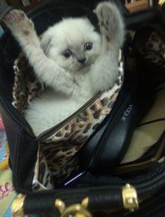 Ankara kedi oteli
