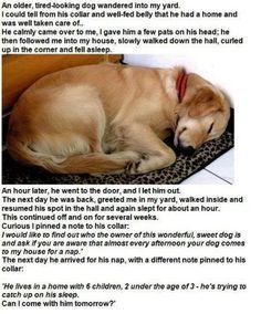 Napping Dog!