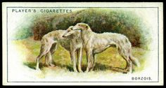 """Cigarette Card - Borzois Player's Cigarettes """"Dogs, Scenic Background"""" (series of 50 issued in Borzois Dog Artwork, Collector Cards, Old Postcards, Book Of Shadows, Vintage Advertisements, Vintage Images, Ephemera, Dog Cat, Antiques"""