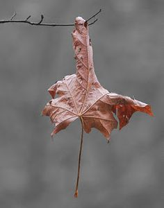 a single leaf Nothing Gold Can Stay, Late Autumn, Changing Leaves, Best Seasons, Pink Grey, Gray, Winter Is Coming, Fall Harvest, Autumn Leaves