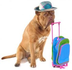 Helpful Tips For Traveling With Your Dog - Dog Pet Care Corner - PetSolutions