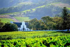 A traditional Cape Dutch style farmhouse sits behind a vineyard in the Western Cape wine region of South Africa.
