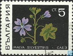 Medicinal Plants - Bulgaria 1969