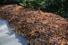 pile of leaves - 1024×678