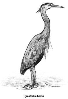 white heron drawing - Google Search