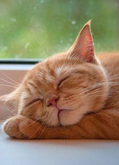 When it comes to cats, we all know that our feline friends absolutely love to snooze, nap and siesta their way through the day — so let's dig a little deeper into the meanings behind cat sleeping patterns, positions and behaviors. Cute Cats And Kittens, I Love Cats, Crazy Cats, Cool Cats, Kittens Cutest, Animal Gato, Saint Yves, Sleeping Kitten, Orange Tabby Cats