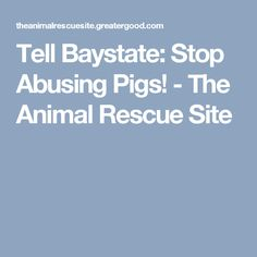 Tell Baystate: Stop Abusing Pigs! - The Animal Rescue Site