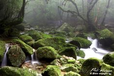 Yakushima mononoke (1) #yakushima #mononokeforest #forest #japan #miyazaki