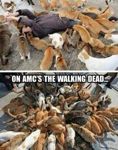 The Walking Dead ..I like it! #twd