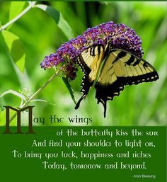 May the wings of the butterfly kiss the sun And find your shoulder to light on, To bring you luck, happiness and riches Today, tomorrow and beyond - Irish Blessing