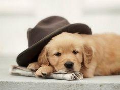 Adorable golden retriever puppy. {Pet Portraits} {Photography}