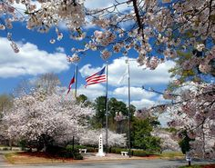 City Hall Plaza | Peachtree City, Ga. Spring time  cherry blossoms at City Hall Plaza.