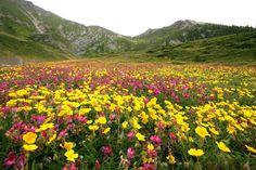 Tappeto di fiori al Parco Orsiera Rocciavrè  #myValsusa 20.06.16 #fotodelgiorno di Dante Alpe