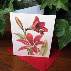 Set of 4 Christmas Cards  Classic Amaryllis by VeronicaFoleyDesign, $6.00