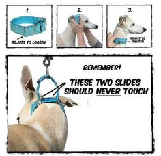 The first time I ever saw a Martingale collar was at the dog park. It was worn by a Greyhound that was new to the park. I probably never even would have noticed the mechanics of the collar if I had… Cat Collars, Diy Dog Collar, Bandanas, Martingale Dog Collar, Dog Teeth, Blue Dog, Dog Coats, Dog Training Equipment, Dog Supplies