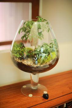 Terrarium in a brandy sniffer!!! Bebe'!!!