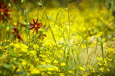 The Yellow Border, by Julie Toll. Photo by Claire Takacs