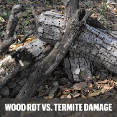 Have you ever seen damaged wood and wondered whether it's because of termites or just wood rot? Learn how to tell the difference in this Terminator blog: www.goterminator.com/blog/wood-rot-vs-termite-damage #TerminatorTPC #TermiteDamage #WoodRot Termite Pest Control, Termite Damage, Wood, Woodwind Instrument, Timber Wood, Trees
