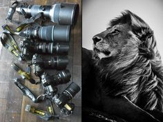 My weapons to shoot a lion #NoMoreCecils #CecilTheLion #BanTrophyHunting #WalterPalmer #KendallJones #JanSeski