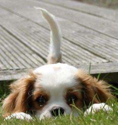 Puppy dog tails....