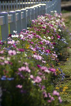 My Fence Line by EyeOfTheJen, via Flickr