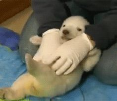 Totally pointless but terminally cute...click to see the animation of the tickling.
