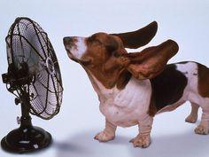 L'estate è caratterizzata dall'afa e dal caldo fastidioso. Qui troverete 6 utili rimedi che vi solleveranno e vi disseteranno in modo naturale