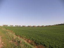 Turismo rural en Navarra, campos de olivos en la Berrueza Navarra