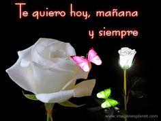 Una rosa para ti con mucho amor Te Amo
