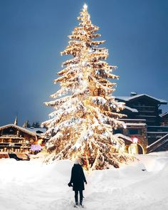 Salut from Courchevel and I am so happy to be here I found a cute little white Xmas tree and I am thinking of how I can bring it back home with me to Vienna White Xmas Tree, Little White, Vienna, Cute, Instagram Posts, Photography, France, Outdoor, Happy