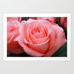Fresh Roses Art Print by Marisa Lopez-Cruzan - $14.70