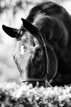 Expression... by Raphael Macek - Horse Photography, via Flickr