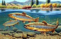 As long as these brown trout keep heading down the river, this fly fisherman is going to have a great day! A great fishing print by Cynthie Fisher. This print is available in an unframed image size of