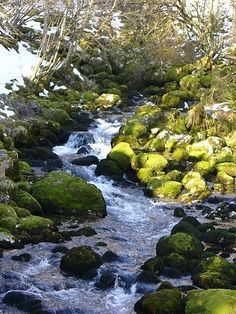 Beautiful creek in Bovec Slovenia