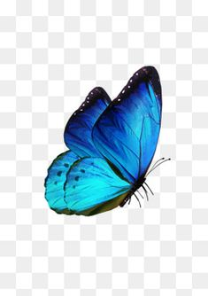 Butterfly Background, Iphone Background Images, Banner Background Images, Studio Background Images, Flower Png Images, Butterfly Pictures, Blur Background Photography, Blur Photo Background, Png Images For Editing