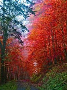 Autumn Forest,Saxony,Germany.