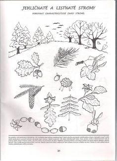 stromy a plody