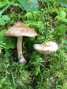 funghi mushrooms iFunch app iPhone Austria