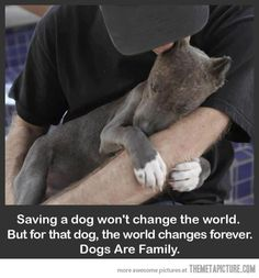 """Saving a dog won't change the world. But for that dog, the world changes forever. Dogs are family."" <3"