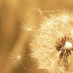 wishes...YES‼ I Lenda VL AM the June 2017 Lotto Jackpot Winner‼000 4 3 13 7 11:11 22Universe Thank You I AM Grateful‼