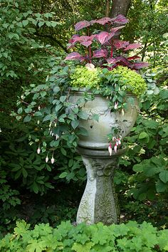 Shade container idea - looks like red coleus at the top, the yellow/green base is probably creeping jenny, trailing plant is Fuschia, and down below the ground looks like Geranium.  This link has tons more gorgeous pictures.