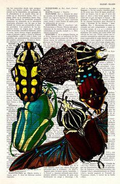 Entomology prints.