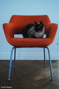 And of course I want Kilta chair in my home. Unfortunately they're also quite expensive. Alain Richard, Home Organization, Accent Chairs, Interior Design, Housewife, Furnitures, Chair Design, Finland, Animals