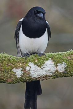 Visit our new-look Galleries to view and search images of thousands of bird species, and join our worldwide community of bird photographers All About Animals, Animals Of The World, Animals And Pets, Cute Animals, Pretty Birds, Love Birds, Beautiful Birds, Exotic Birds, Colorful Birds