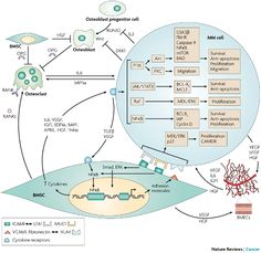 Understanding multiple myeloma pathogenesis in the bone marrow to identify new therapeutic targets