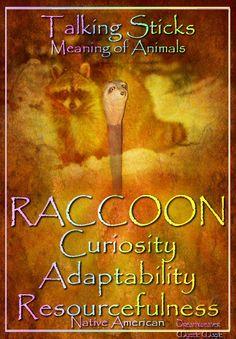 RACCOON Curiosity Adaptability Resourcefulness