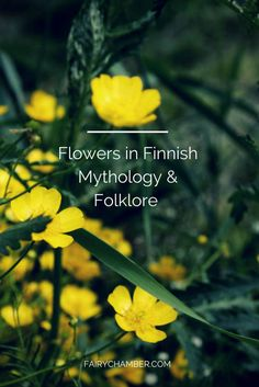 Flowers magic and superstitions in Finnish folklore Flowers have always been powerful ingredients in folk magic and Finland is not an exception. Habit of picking flowers and putting them into a vase was not something that regular folk did but the. Finnish Tattoo, Marsh Marigold, Blowing Dandelion, Finnish Language, Viking Runes, Hawaiian Flowers, Magick, Witchcraft, Love Spells