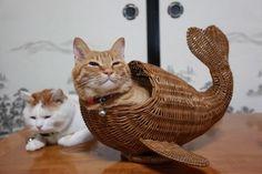I've <em>always</em> wanted a wicker whale-cat.