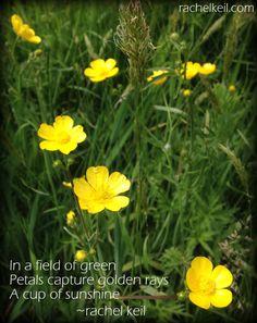 A cup of sunshine-Blog Haiku