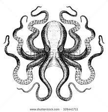 Image result for octopus drawing